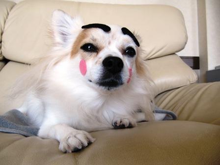 眉毛犬だにょ~ん。