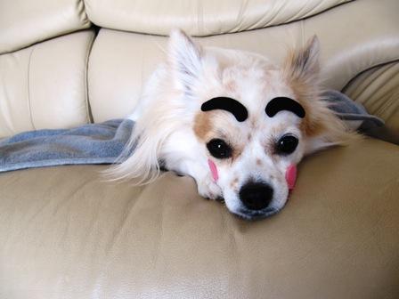眉毛犬だにょ~ん2。