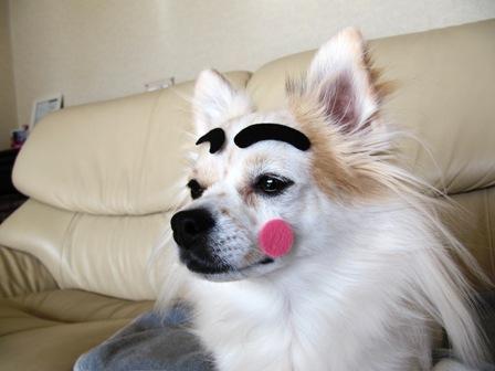 眉毛犬だにょ~ん3。