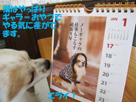 チワワ川柳カレンダー2。