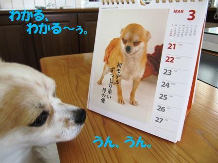 チワワ川柳カレンダー3。