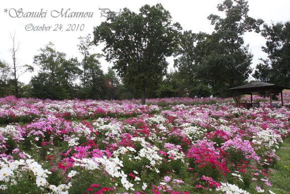 mannou