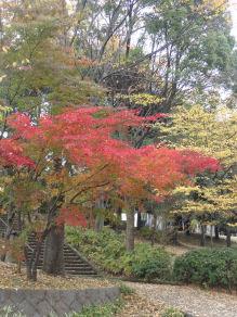 DSC01817 紅葉