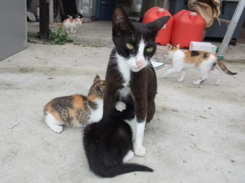 黒ちゃんと子猫