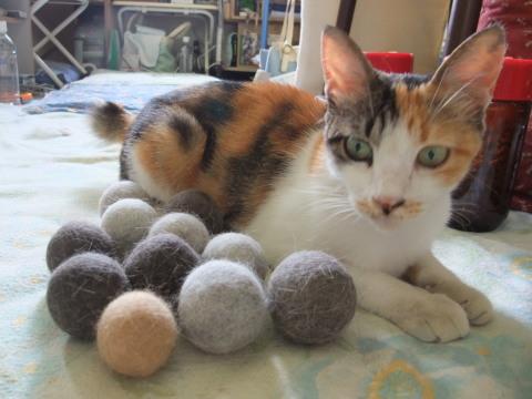 毛玉ボールとスモモ2