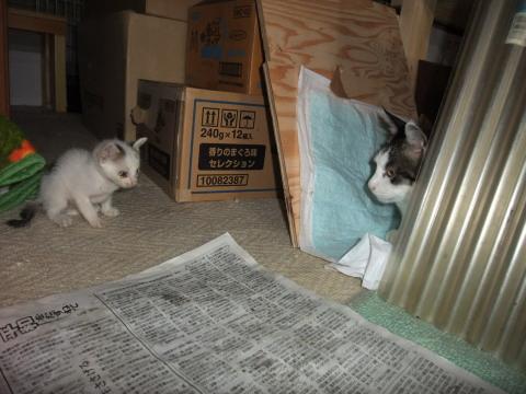子猫とハヤト