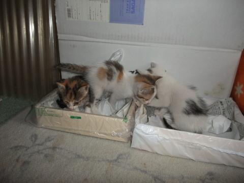 子猫 トイレで