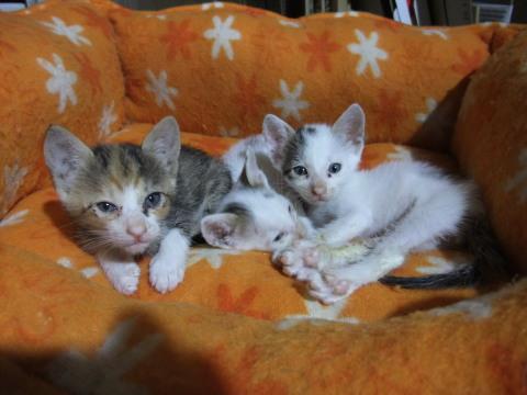子猫たち2