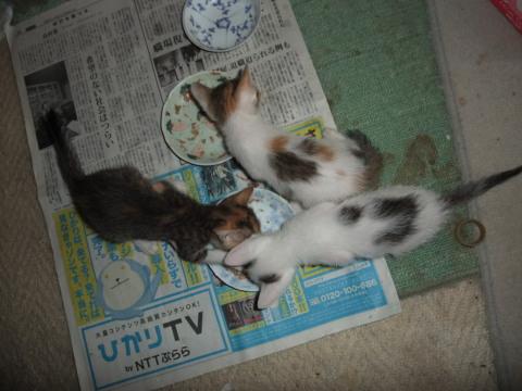 子猫お食事