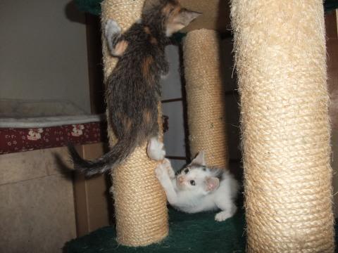 子猫 遊ぶ5