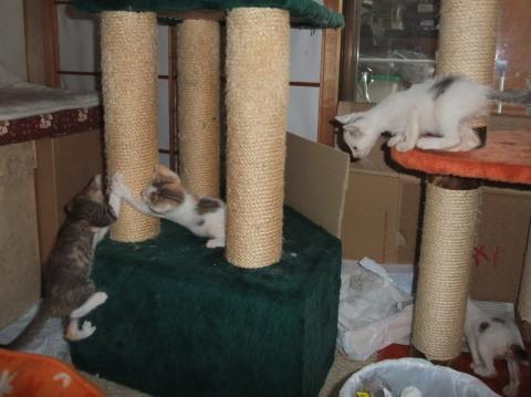 子猫 遊ぶ3