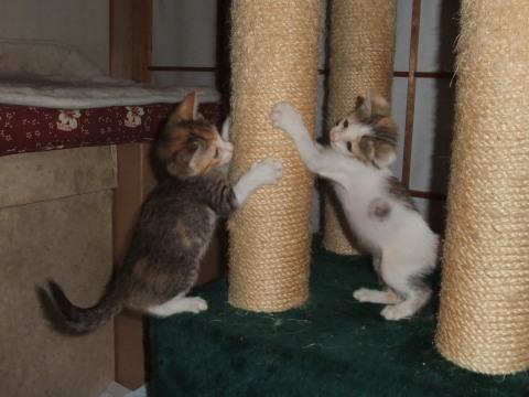 子猫 遊ぶ2