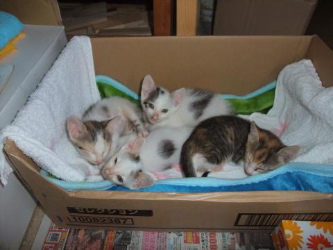 子猫ベッド