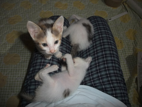 子猫 膝の上