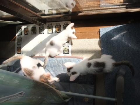 子猫 日向で