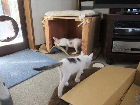 子猫 リビング探検