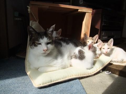 ハヤトと子猫たち