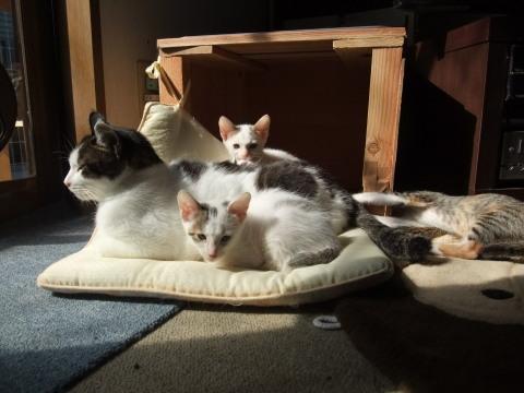 ハヤト と子猫たち