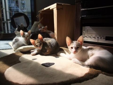 子猫 とハヤト