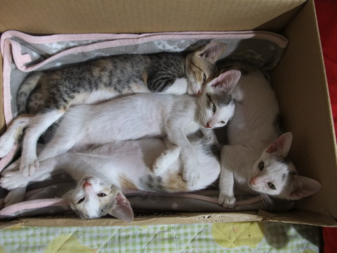 子猫 箱詰め?