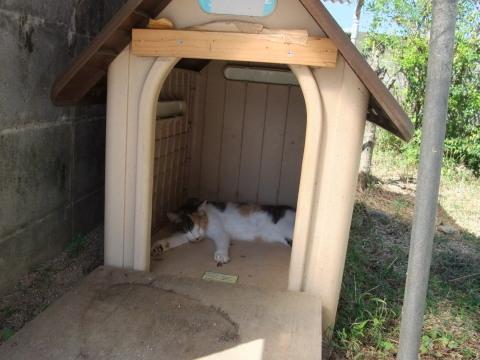 スモモ 犬小屋で