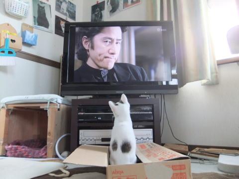 テンテンと任三郎