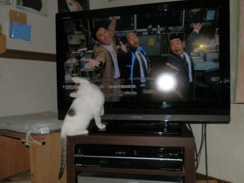 テンテンとテレビ