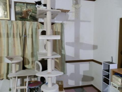 タワー撤去後