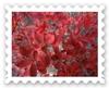 DSC00550_20111210112759.jpg