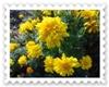 DSC00552_20111210112852.jpg