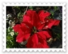 DSC00556_20111210131407.jpg