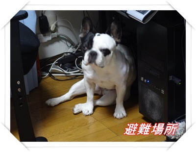 DSC00981_20120106212024.jpg