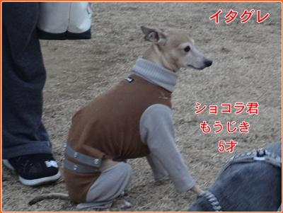 DSC01343.jpg