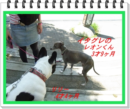 RIMG10455.jpg