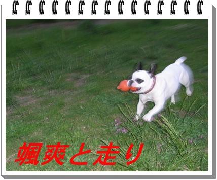 RIMG10513.jpg