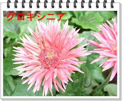 RIMG10843.jpg