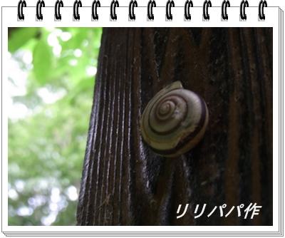 RIMG11497.jpg