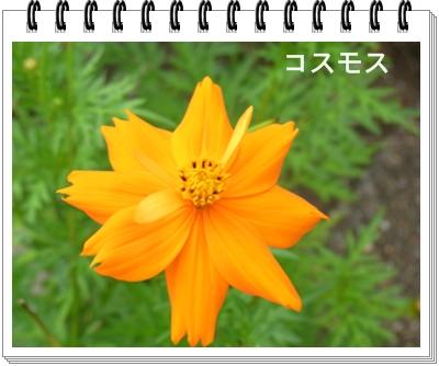 RIMG11532.jpg