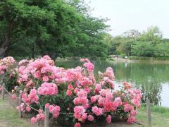 2010_0515(052).jpg