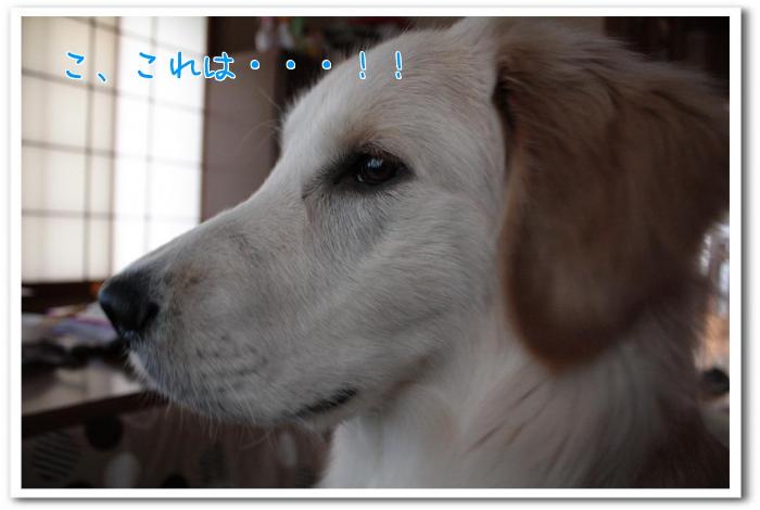 XQPn6.jpg