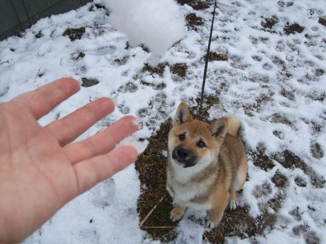 雪の日 017