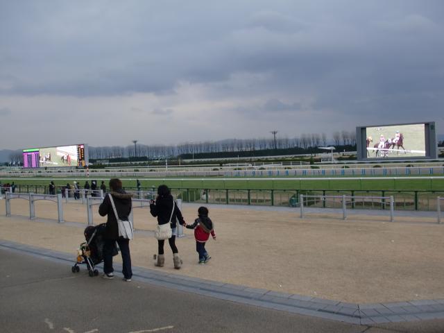 京都競馬場馬場付近
