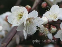 springhascome.jpg