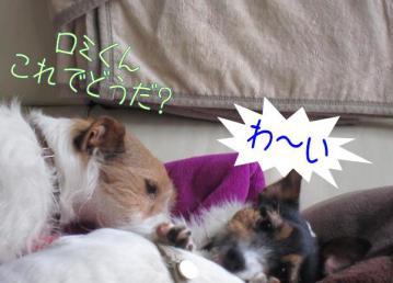 20110505003.jpg