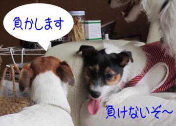 20110505006.jpg