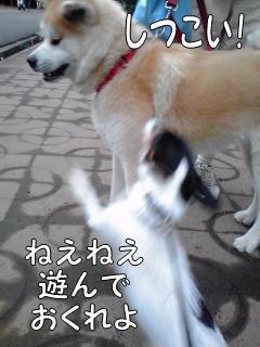 20110611004.jpg