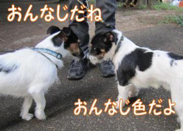 20111010003.jpg