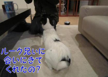 20120208002_20120209222437.jpg