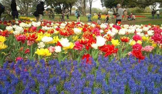 昭和記念公園10