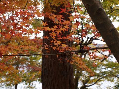 2009-10-11-17 240 三千院3